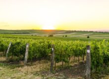 Notable Wine Regions