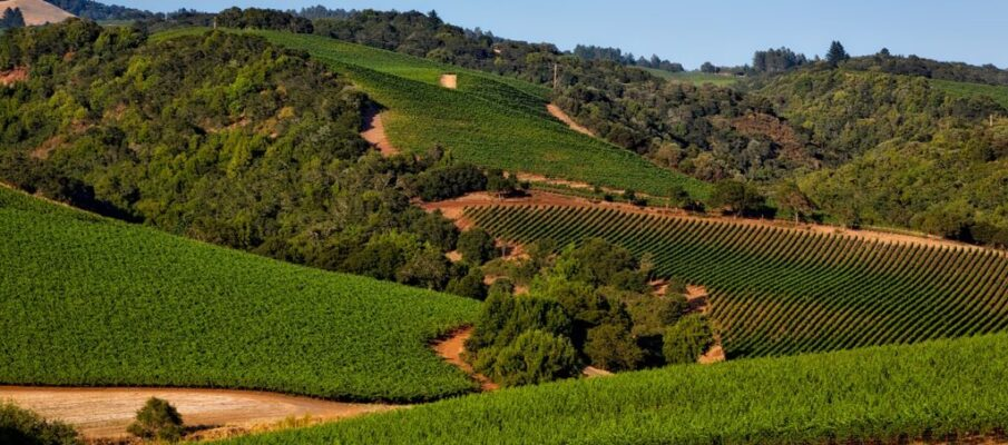 vineyard-1597724_1280